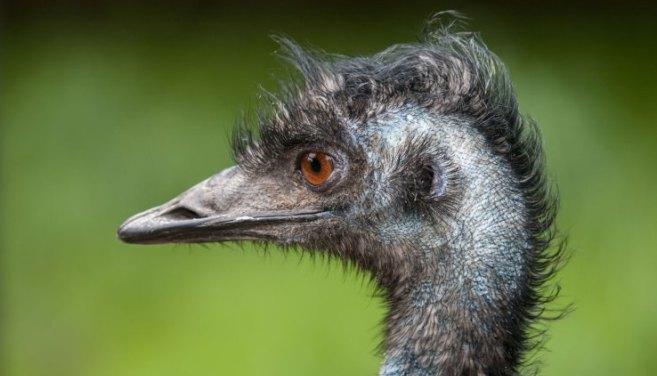 emu-messaggistica