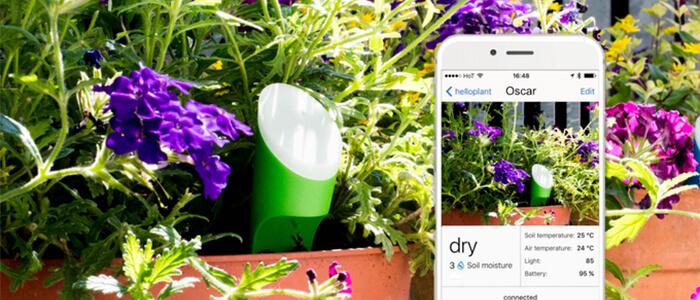 Helloplant sensore piante Kickstarter
