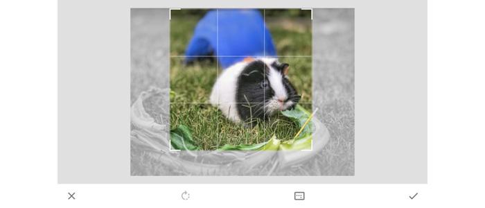 Smartphone photo crop
